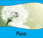 BTN-Plants-160