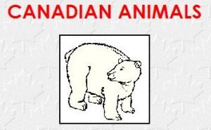 canadiananimals