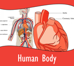 BTN-humanbody